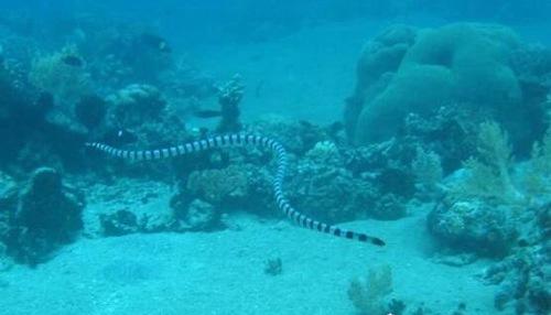 史前海洋中最大蛇类_WWW.66152.COM