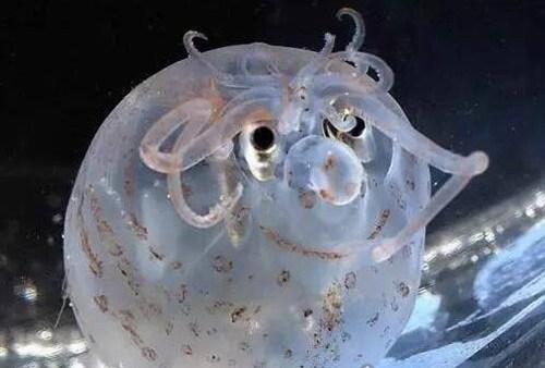 世界上最可爱的章鱼_WWW.66152.COM