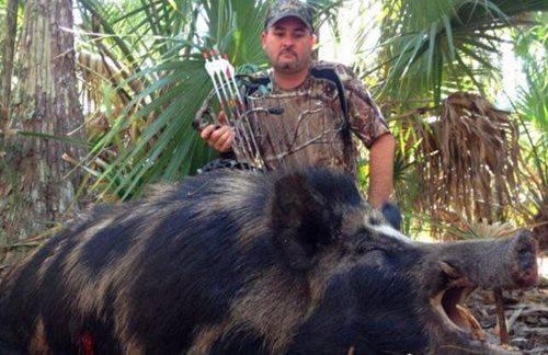 世界上最大的野猪_WWW.66152.COM