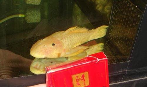 世界上最独特的变异鱼种_WWW.66152.COM