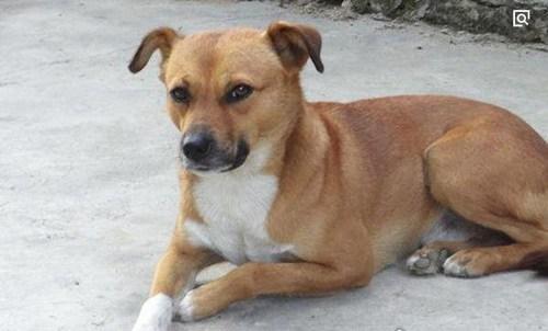 世界十大最忠诚的狗排名_WWW.66152.COM