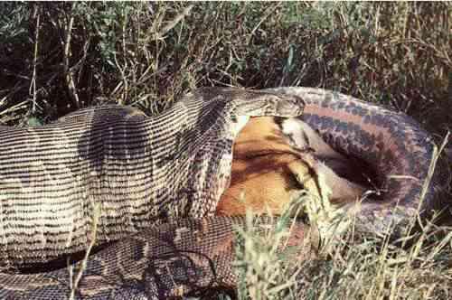 远古最可怕的三大巨蛇_WWW.66152.COM