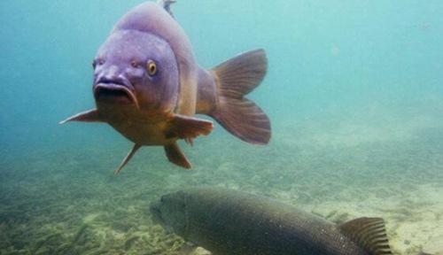 狗鱼是什么样的图片_WWW.66152.COM