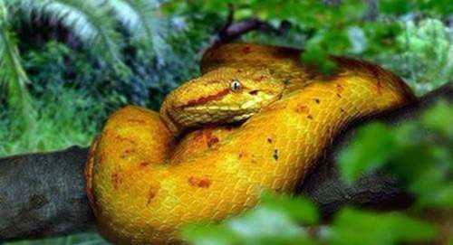 世界上最恐怖的蛇岛_WWW.66152.COM