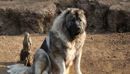 十大禁犬排行榜_WWW.66152.COM