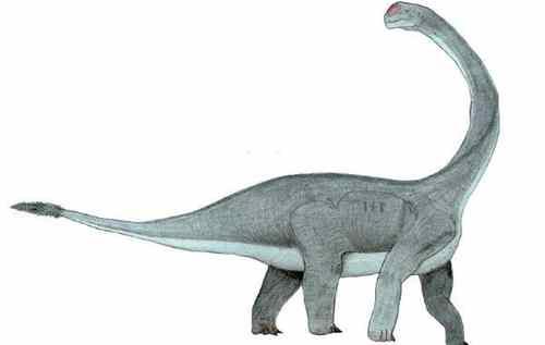 文雅龙:四川大型四足食草恐龙(长9米/距今1.61亿年前)_WWW.66152.COM