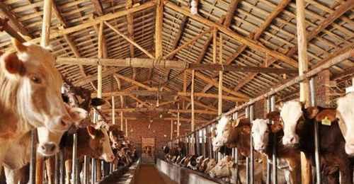 养牛的利润与成本分别是多少?_WWW.66152.COM