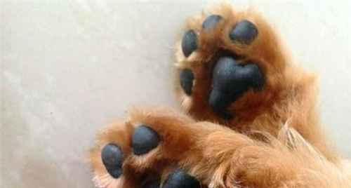 为什么狗狗洗完澡还很臭?_WWW.66152.COM