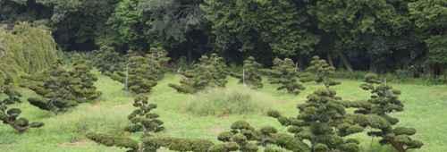 耐寒的树木有哪些?_WWW.66152.COM