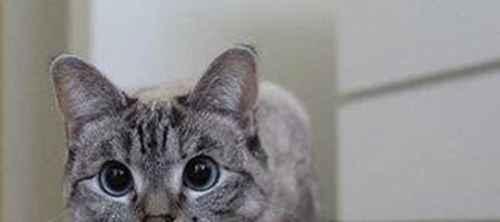 捡到小猫带回家应该怎么办_WWW.66152.COM