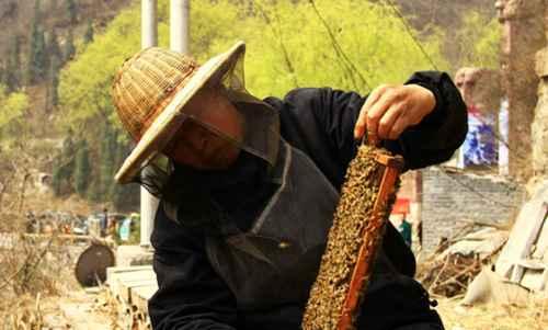 为什么蜜蜂不会蜇养蜂人?_WWW.66152.COM