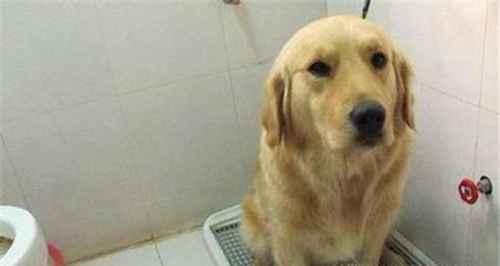 怎么让狗狗固定去厕所尿尿_WWW.66152.COM