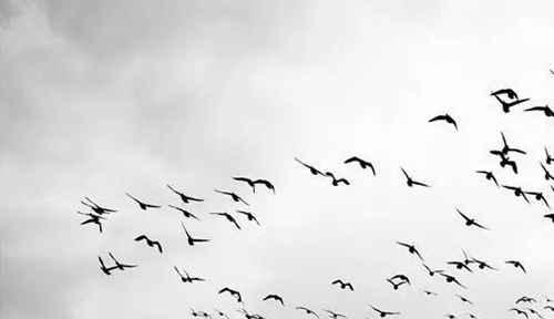 形容孤独无人懂的诗句有哪些?_WWW.66152.COM