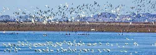 东北区为什么是我国候鸟的乐园?_WWW.66152.COM