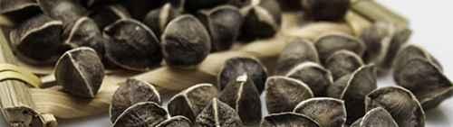 辣木籽的功效与作用及食用方法是什么?_WWW.66152.COM