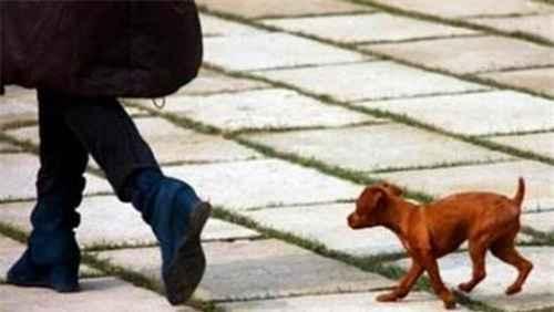 遇到狗跟着你叫怎么办?_WWW.66152.COM