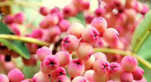 植物传播种子的方法有哪些呢?_WWW.66152.COM