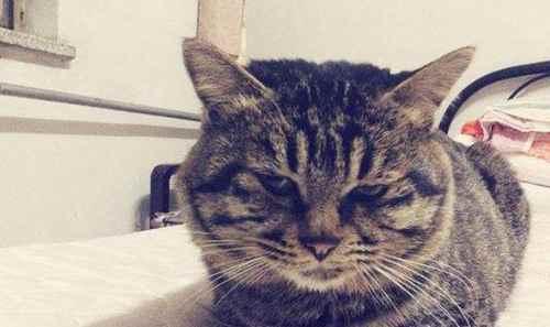 适合猫咪吃的食物_WWW.66152.COM